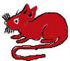 1.Red Rat- srednji