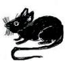 4.Blac Rat