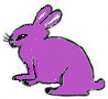 16.Purple Rabbit