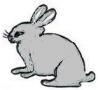 18.Silver Rabbit