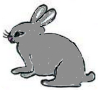 19.Grey Rabbit