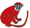 Majmun - crveni