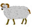 Siva Ovca