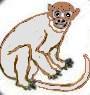 majmun beli