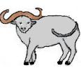 8.Siver Ox mali