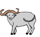 8.Siver Ox