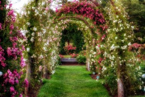 Arch-of-Roses-in-Rose-Garden