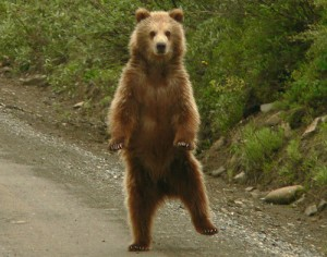 dancing_bear_by_lanimilbusx